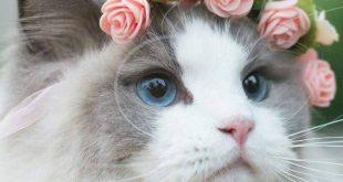 بالصور اميرة القطط في السويد