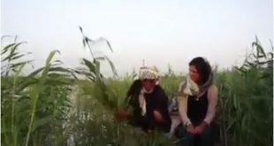 حصريا بالفيديو اول سائحه اجنبية وصلت الى الاهوار جنوب العراق